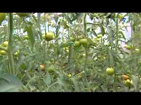 Vega Video 1. — Granola   Emisiuni in limba maghiara.flv