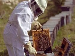 Doneaza un stup sau un roi de albine pentru o familie de misionari adventisti