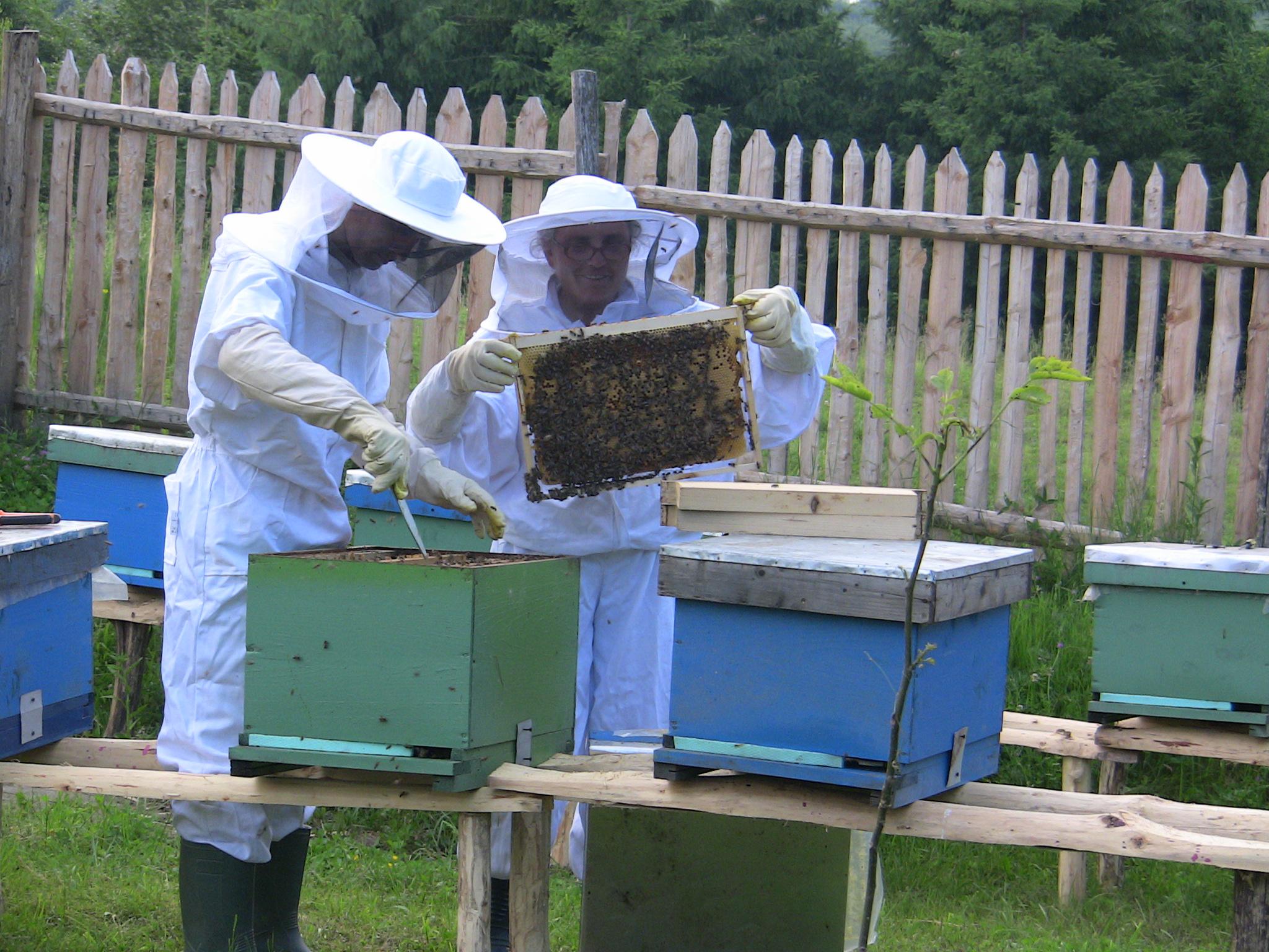 VIDEO – Libraria Crestina Maranatha a donat 3 000 de euro pentru infintarea unei ferme apicole pentru o familie adventista
