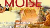 Punct Instrumental: miniharpe Pitesti