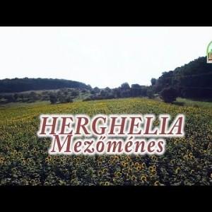 HERGHELIA | Mezőménes PROMO 2018